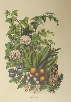 'Flowers of Ireland', a 19th century engraving from the Hatton Gallery by George C Leighton. Happy St Patrick's Day!