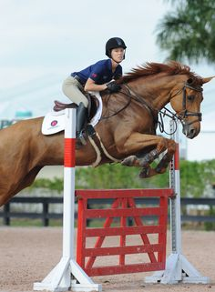 """""""Ana Forssell did a good job containing her ride's stride on Day 3 of the George H. Morris Horsemastership Training Session."""" Photo taken by Molly Sorge."""