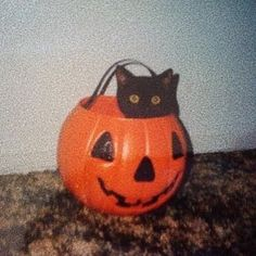 Your kitty, Squiggles, at Halloween Cool Halloween Costumes, Vintage Halloween, Fall Halloween, Halloween Makeup, Happy Halloween, Animal Original, Guppy, Hallows Eve, Cute Cats