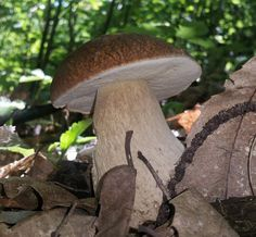 Passione funghi e tartufi - Fb