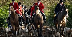 "Chris Pitt says the Tories must crack down on the chasing and killing of foxes that is taking place on a dally basis under the disguise of ""trail"" hunting"