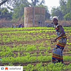"""#Beninrepost #Repost @solarfund with @repostapp  Thomas Friedmans column in the @nytimes today speaks to the importance of the work that we are doing in Benin with our Solar Market Gardens (pictured here). Click the link in our bio to read it and check out the excerpt below in which Monique Barbut who heads the U.N. Convention to Combat Desertification is quoted. """"The European Union struck a deal with Turkey to vastly increase E.U. aid to Ankara for dealing with refugees and migrants who…"""