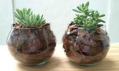 Como plantar suculentas: dicas práticas - Blog do Elo7