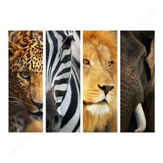 Safari Life Wall Decal. Safari ThemeJungle SafariSafari Room DecorSafari  Living ...