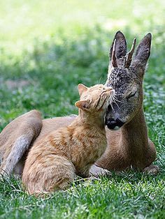 I love it when you see two different kinds of animals loving on each other.  Sweet.