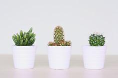 Cactus love! | Eunoia Studio Blog