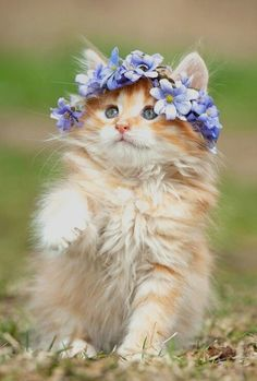 Flower #kitty is in heaven :)