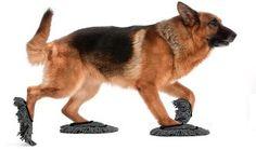 Pet Sweep: le pantofole per il cane