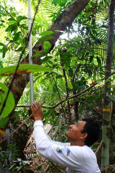Bajando muestras para identificación de especies