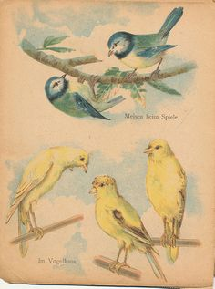 vintage birds {jan willemsen}