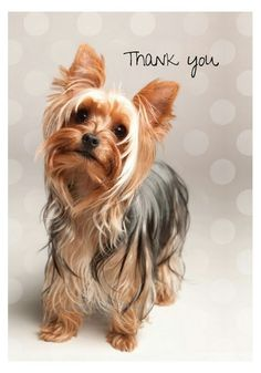 Yorkshire Terrier Boxed Thank You Notecards Baie Dankie, Yorkshire Terrier Puppies, Yorkie Puppy, Yorkies, Puppy Love, Note Cards, Cute Pictures, Cute Animals, Happiness
