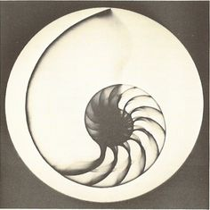 Nautilus shell scan. Would be an incredible tattoo.