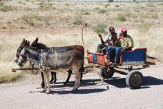 #africa #cart #coach #dare #donkey #donkey cart #namibia #royalty free #rural
