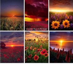 Flowers and sunsets Love Collage, Color Collage, Beautiful Collage, Beautiful Images, Beautiful Flowers, Beautiful Scenery, Framed Wallpaper, Fall Wallpaper, Farm Pictures