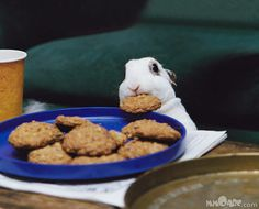 bad bunny lol. #rabbit #cookie #humor