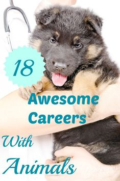 27 Pet Care Ideas Animal Lover Jobs With Animals Pet Care