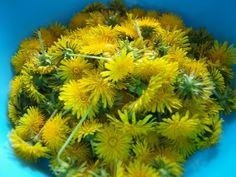 Púpavový med najlepší na svete (fotorecept) - Recept Med, Plants, Plant, Planets