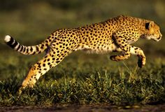 animals in motion - Google Search