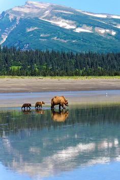 Looking for an amazing wilderness experience with wild Alaskan brown bears? Get one on this tour from Homer that takes you by plane deep into Katmai National Park or Lake Clark National Park