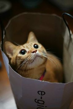 - Sir, there must be an error. I can't find cats' food in your shopping bag.