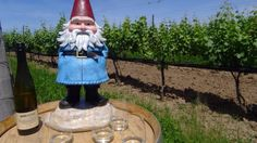 Oh come on, Canada. Now you're just showing off with the wine and sunshine at @RavineVineyard. #seizethesummer #GnomeWisdom