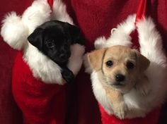 Thanks for helping us name these adoptable puppies from Animal Wellness Foundation! We're proud to introduce Holly & Jingle. Service Dogs, Christmas Dog, Dog Photos, Cute Animals, Blessed, Puppies, Foundation, Wellness, Friends