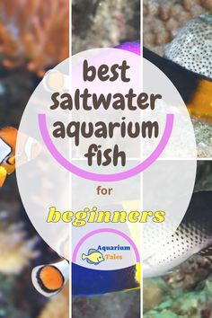 Saltwater Aquarium Fish, Saltwater Tank, Aquarium Setup, Aquarium Ideas, Fishing For Beginners, Salt Water Fish, Step By Step Instructions, Fresh Water, Challenge