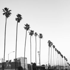 In #LA for client training, escaping before the #Oscars ! #palmtrees #losangeles #hollywood #fashion #style #agency #agents #modelagency #models #modeling #talent #model #booker #bandw #bw #mono #bnw #monochromatic #blackandwhite #blackwhite...