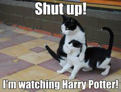 Harry Potter - Images - Google+