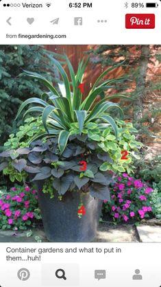 Interesting plant composition