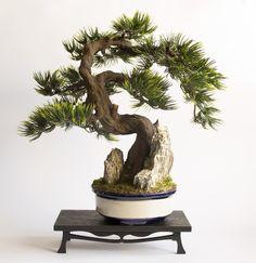 Artificial bonsai tree done in the style of Sekijōjū - Stuczne drzewko bonsai wykonane w stylu Sekijōjū