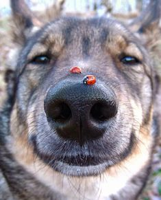 Ladybug snoot #cute #dogs #dog #aww #puppy #adorable
