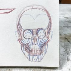 My first human anatomy draw. Im so happy and excited to start taking for the first time human anatomy classes hope to get better and better. - - - - -  #stephanymarlen3 #human #anatomy #skull #illustration #wip #mexican #artist #illustrator #love #lifestyle #black #white #blackandwhite #sketch #paper #creative #idea #art #process #artwork #instagram #instaart #artistsoninstagram #artcollective #mexicanartist #tijuana #mexico #vlogger #photooftheday