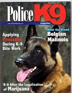Belgian Malinois for sport, police, personal protection and family companions.