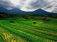 Le système d'irrigation des rizières à Bali