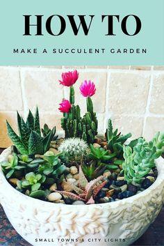 How to make a succulent garden
