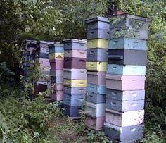 How to raise honey bee's