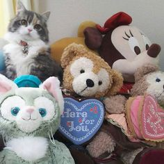 おはにゃーん☀️こなつはここにゃんよ〜〜👀 #cat#norwegianforestcat #instacat #catstagram #猫#ねこ#ノルウェージャンフォレストキャット#ふわもこ部 #picneko#みんねこ#ペットネット #ミヌエット #minuet #にゃんすたぐらむ #猫好きさんと繋がりたい #ミニー#シェリーメイ#こねこ#マンチカン#ペルシャ猫#子猫#短足#愛猫 #nyaspaper #短足猫 #長毛猫 #こなつ#ペコねこ部#ジェラトーニ#ダッフィー