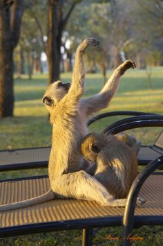 Алена Ларина: фотоальбом Африка Kangaroo, Animals, Animales, Animaux, Kangaroos, Animais, Animal