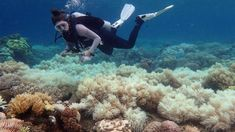 Forskere, der kan redde Great Barrier Reef, kan se frem til ti millioner kroner, lover australsk minister.