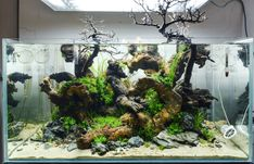 "petiteplanet: ""fuck-yeah-aquascaping: ""The first day of my new 90x45x45 tank — yihhaa "" Our brand new studio fishtank :) """