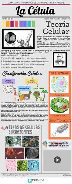 La Célula   @Piktochart Infographic Valentina Castelblanco