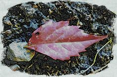 25 free pictures of a leaf for commercial use | 1 million free pictures