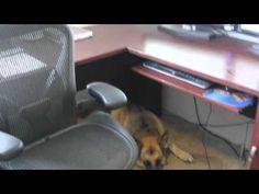 Expert Pets: Terry Dean's Dogs