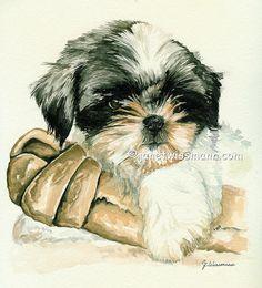 Shih Tzu puppy watercolor