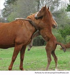 A big hug for mommy – Little horse knows when it is Mother's Day.