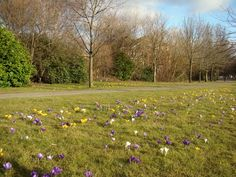 Crocus.... plant it throughout the lawn. They look like Easter eggs!