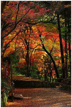 Autumn colors at the entrance of Bishamon-do temple, Kyoto, Japan
