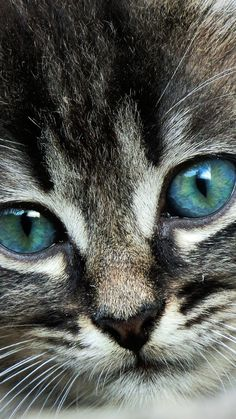Download Wallpaper 1080x1920 cat, face, eyes, color Sony Xperia Z1, ZL, Z…