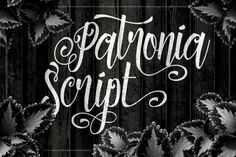 Get these 11 Best-Selling Fonts from Twicolabs - only $27! - MightyDeals